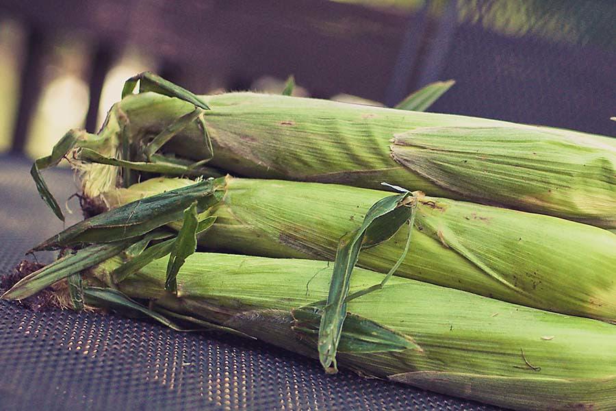 8.9.11 corn