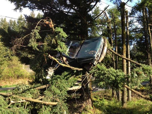 'Pior motorista do mundo' saiu da pista e bateu carro em árvore, deixando veículo a 3 m do chão (Foto: Caters News Agency)
