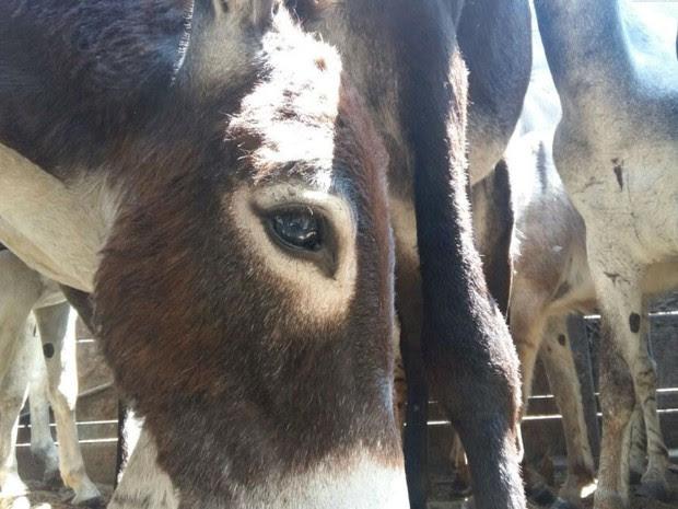 Pele dos animais seria comercializada com indústria farmacêutica da China, diz Adab  (Foto: ADAB)