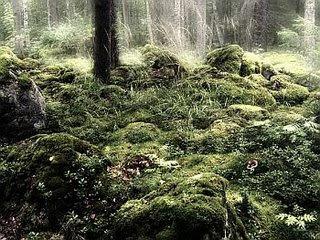 un bosque sombrío