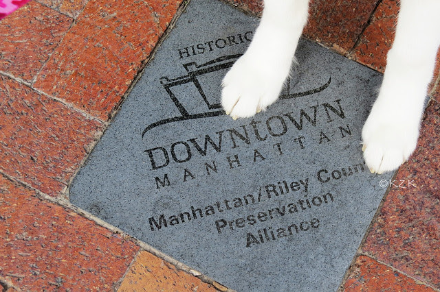 IMG_8539DowntownPaws