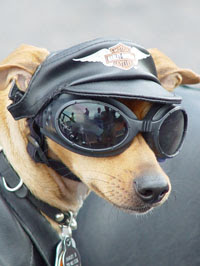 funny-dog-picture-biker