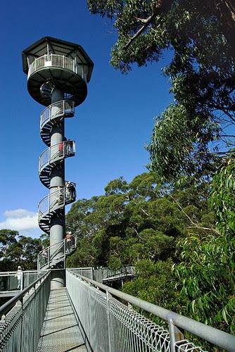 Illawarra Fly Tree Top Walk, Knights Hill, New South Wales, Australia, Knights Tower IMG_4511_Illawarra_Fly
