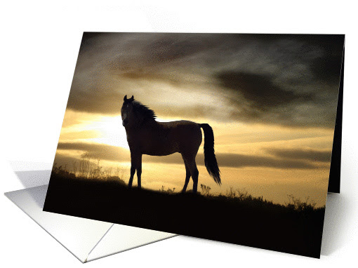 Sympathy Cards For Loss Of Horse Horse Sympathy Cards