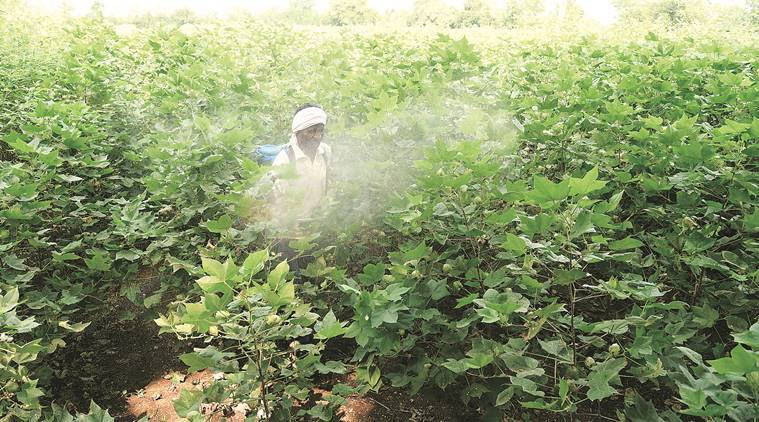 Pesticide deaths, Pesticide risk regulation, Insecticides Act, 1986 Act, pesticide poisoning, mid-day meal contamination, school children pesticide deaths, indian express column