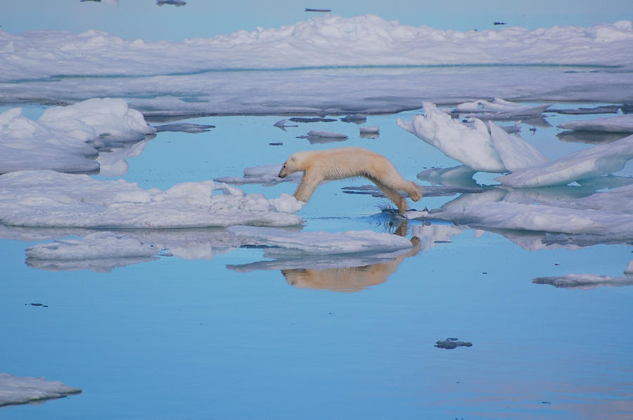 Jumping Polar Bear by Mango8211