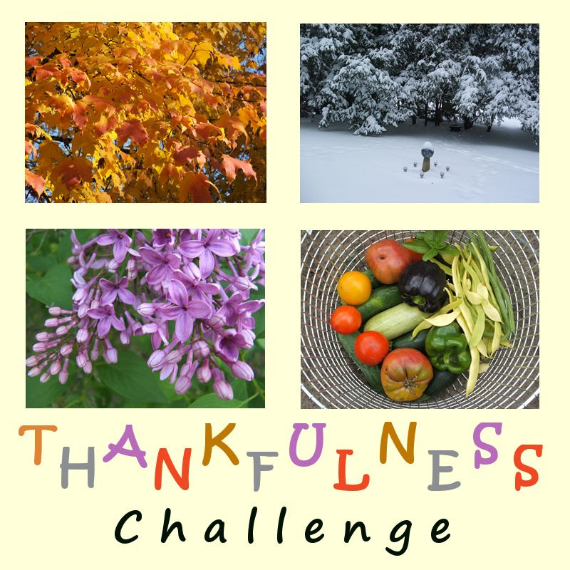 by Angie Ouellette-Tower for http://www.godsgrowinggarden.com/ photo ThankfulnessChallenge_zpsm0zb5auw.jpg