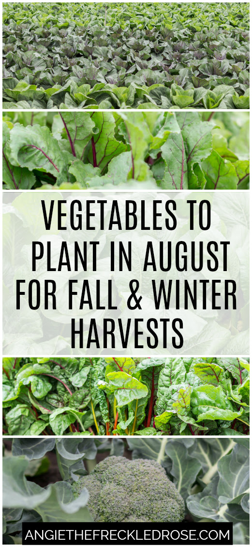 Vegetables to Plant in August for Fall & Winter Harvests