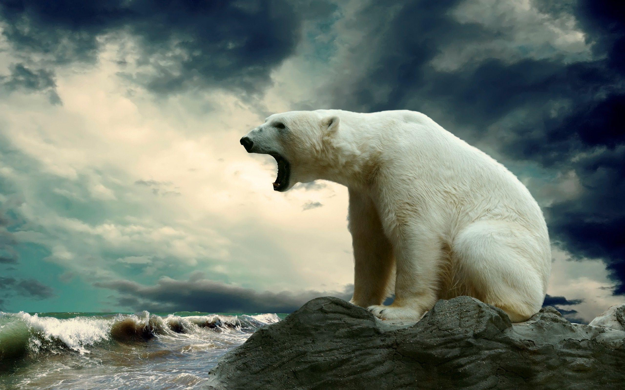 Polar Bear Wallpapers  Wallpaper Cave