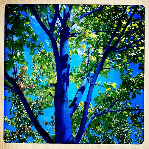 BC Summer So Cold Trees Turn Blue