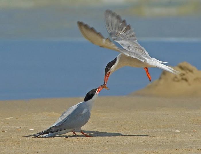 Bird_12 (700x536, 190Kb)
