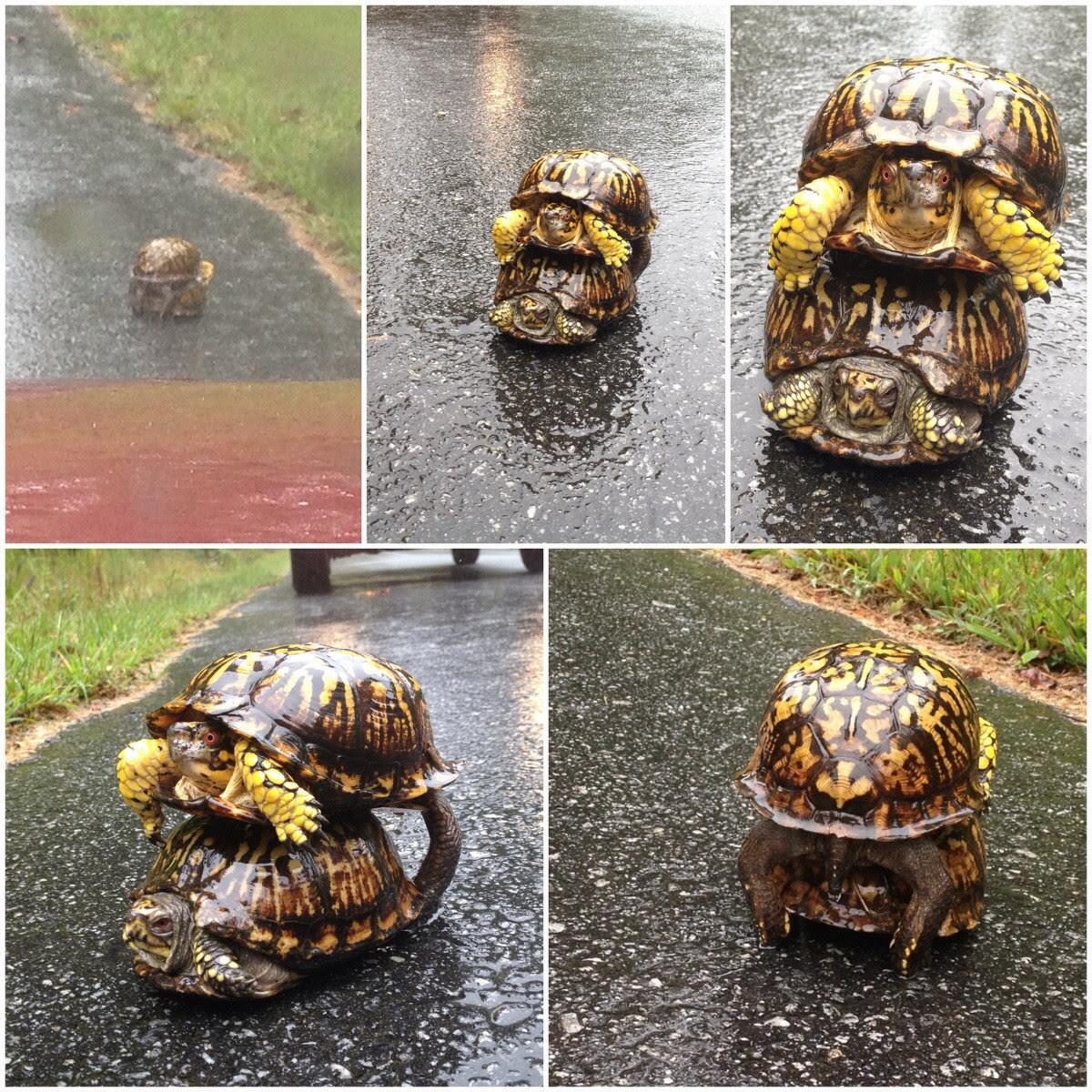 Rainy Day Slowpoke Funny