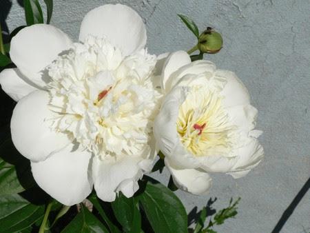 f_te_des_p_res___fleurs_055