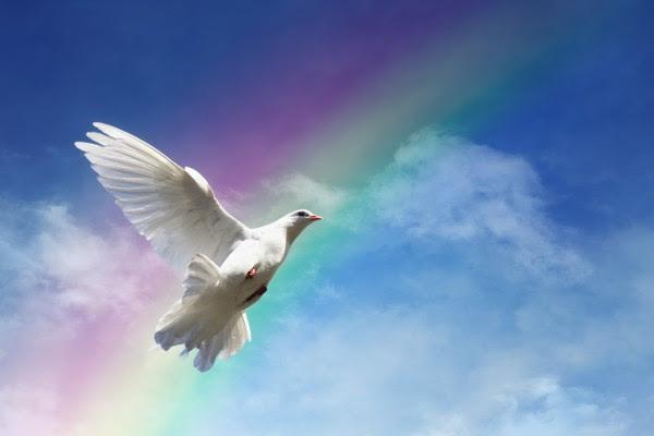Paloma Volando Frente A Un Arco Iris 35668