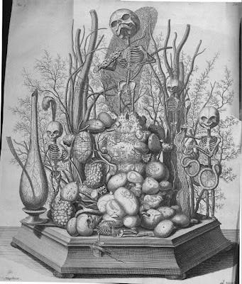 foetal skeletons in wunderkammer display