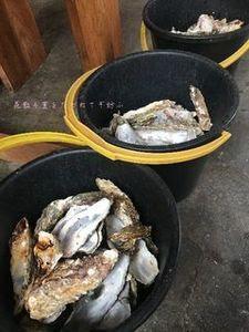牡蠣食べ放題.JPG