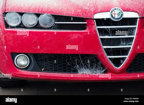 Alfa Romeo On Ice