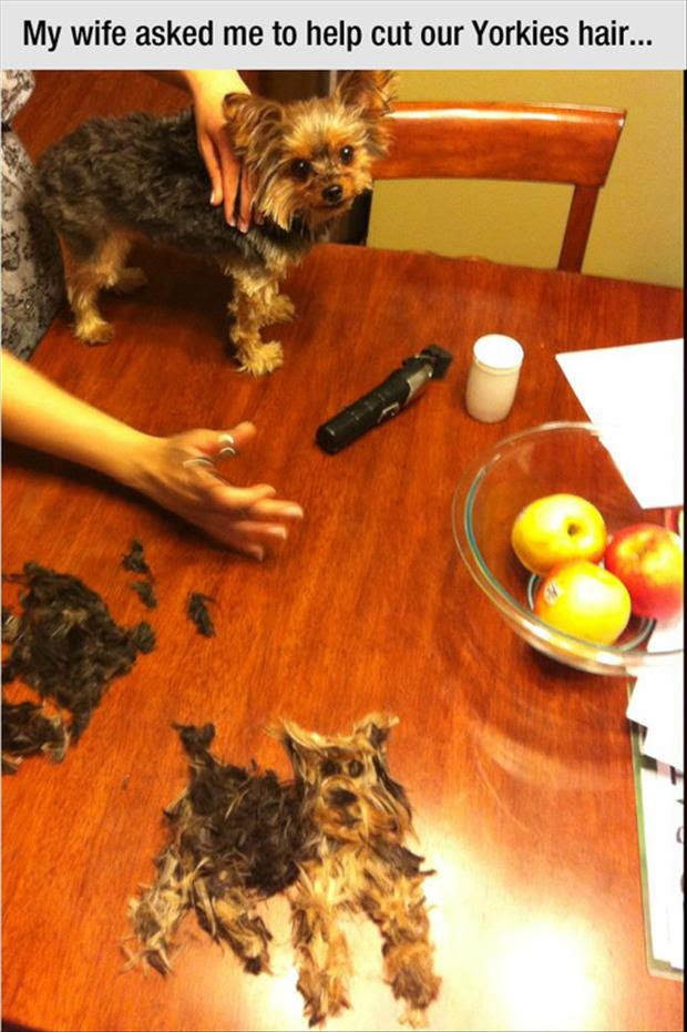 Funny Dog Hair Cutting Humor Dump A Day