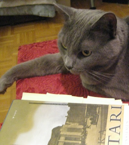 cat and literature