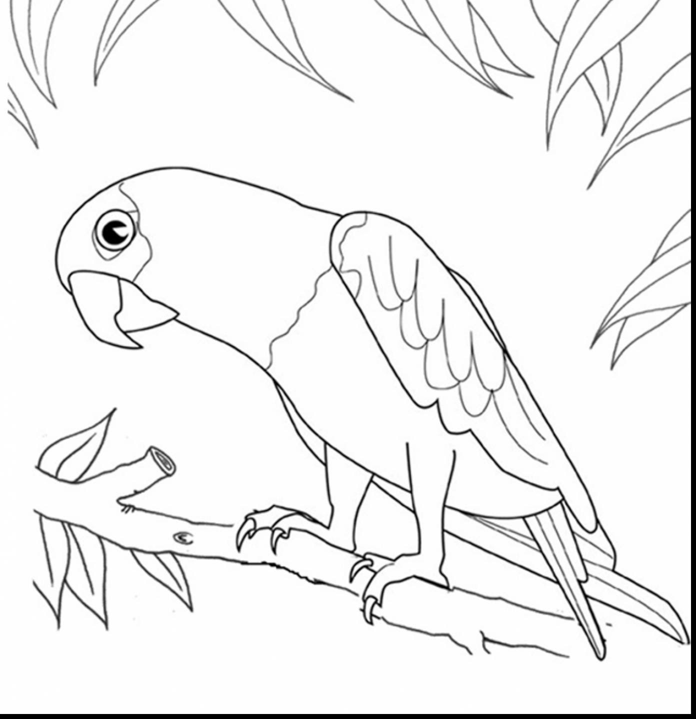 9200 Top Coloring Pages Parrot Bird Images & Pictures In HD