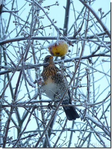 Some doubts, BIRD?Why do not eat the apple?