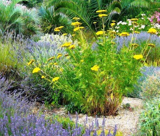 mon jardin mediterraneen plantes sans arosage ou presque. Black Bedroom Furniture Sets. Home Design Ideas