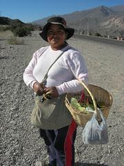 Rosa in Maimara