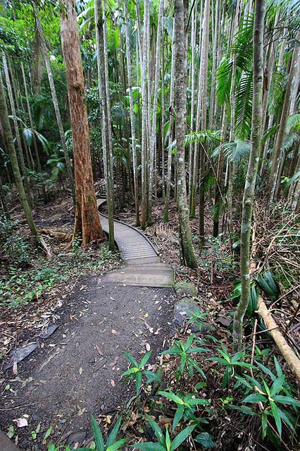 MalenyRainforest1