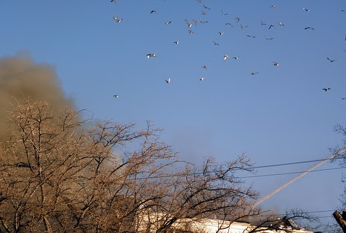 Flight of the Fire