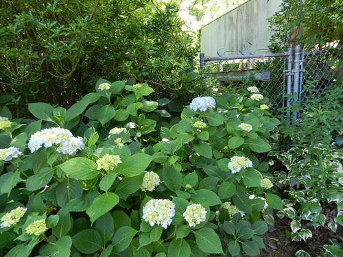 todayflowersDSCN7524