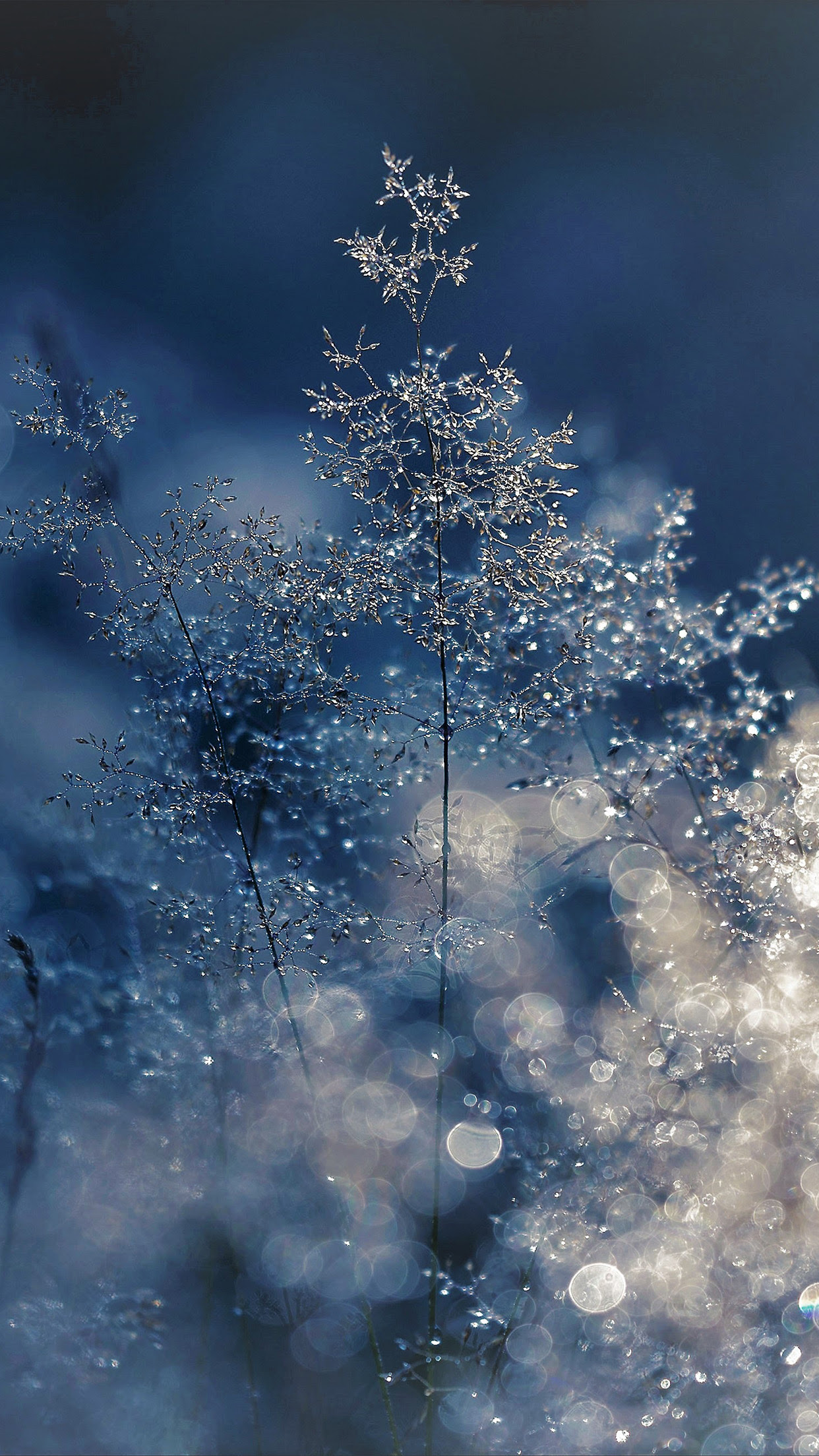 Zendha: Iphone Nature Beautiful Wallpapers