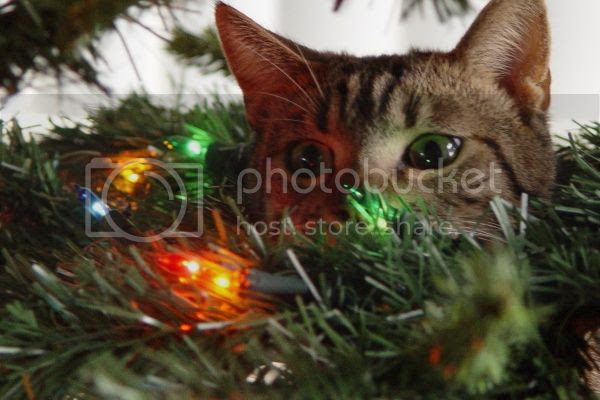 cat christmas tree photo: cat cat-in-christmas-tree_.jpg