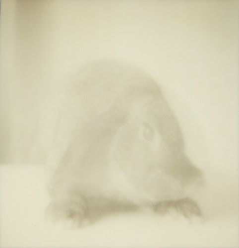 a rabbit ghost <3