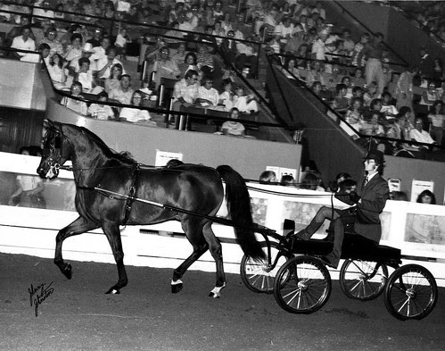 img029_Serada_at_1976_Nationals_in_Louisville