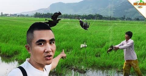Bắt Chim Bằng Lưới : Bắt Chim Cò, Gà Nước, chim Chích | Duy Jungle