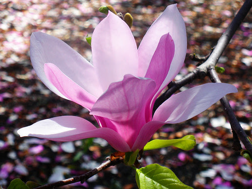 magnolia with pioneerwoman freshcolorful