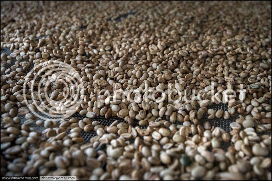 Kopi Luwak, el mejor café del mundo