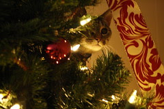 Maggie peeks from inside the tree