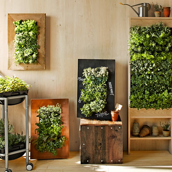 Your Dream Indoor Garden Ideas That Will Amaze You