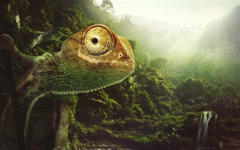 Chameleon Wallpapers   HD Wallpapers   ID #13070