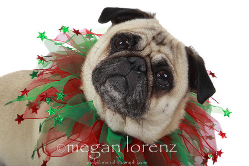 Merry Christmas! by Megan Lorenz