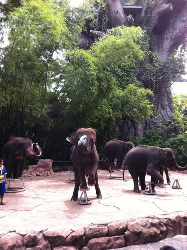 Safari World, Bangkok Thailand