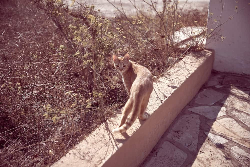 Zoe Adlersberg - making friends with the local cats in Ibiza