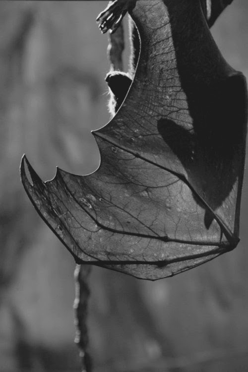 ARE THOSE BATS? HOW COULD A HOUSE HAVE A CAVE OF BATS? JOIN THE DEAD GAME AND FIND OUT.