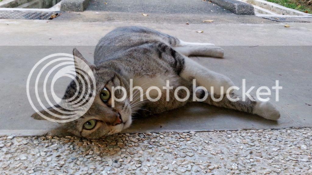 photo CatJRT17May11.jpg
