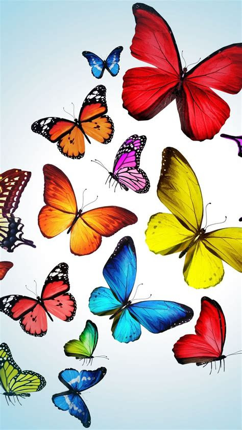 iphone  wallpapers photo butterfly pinterest