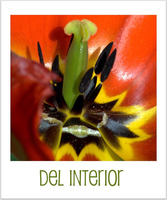del tulipán