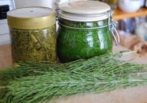 Skrzyp polny źródło krzemu - receptury oczyszczające i lecznicze