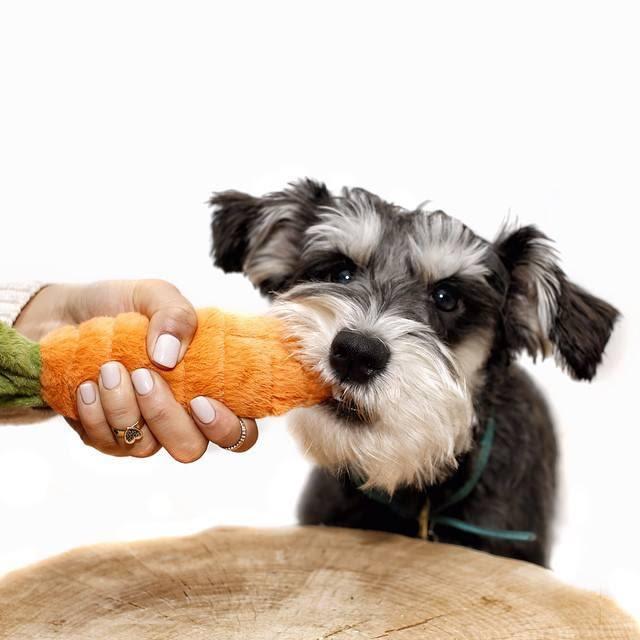 frutas y verduras tóxicas para perros