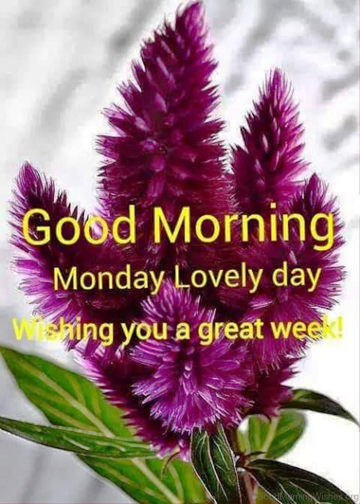 34 Monday Good Morning Wishes